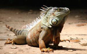 reptile details
